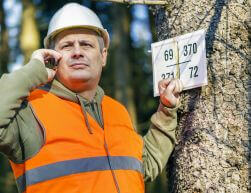 Tree Diagnostic Service